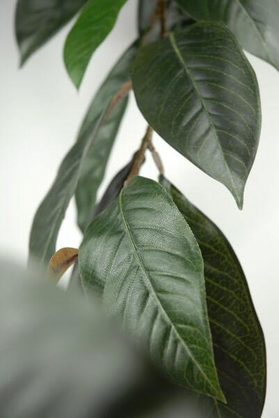 Natural Touch Magnolia Leaf Garland 6ft  44 Leaves