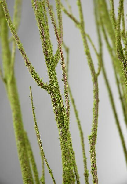 birch tree branches moss coated 4 5 5 branches bunch