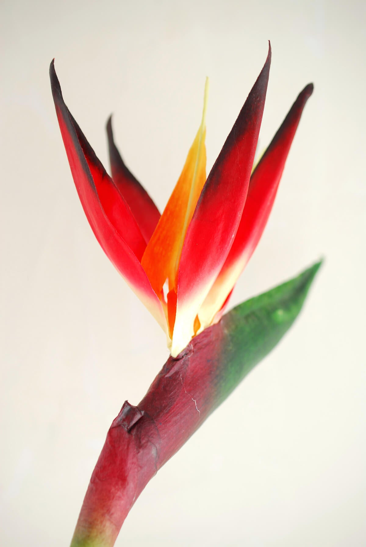 Bird of Paradise Spray 31in