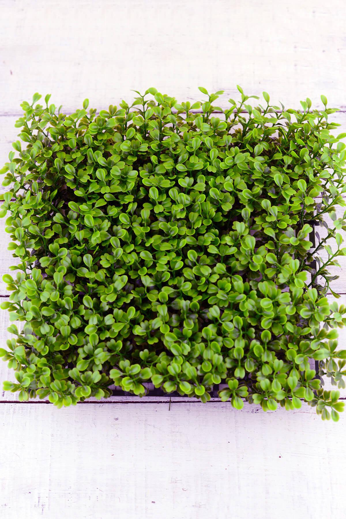 Boxwood Mat  10x10in