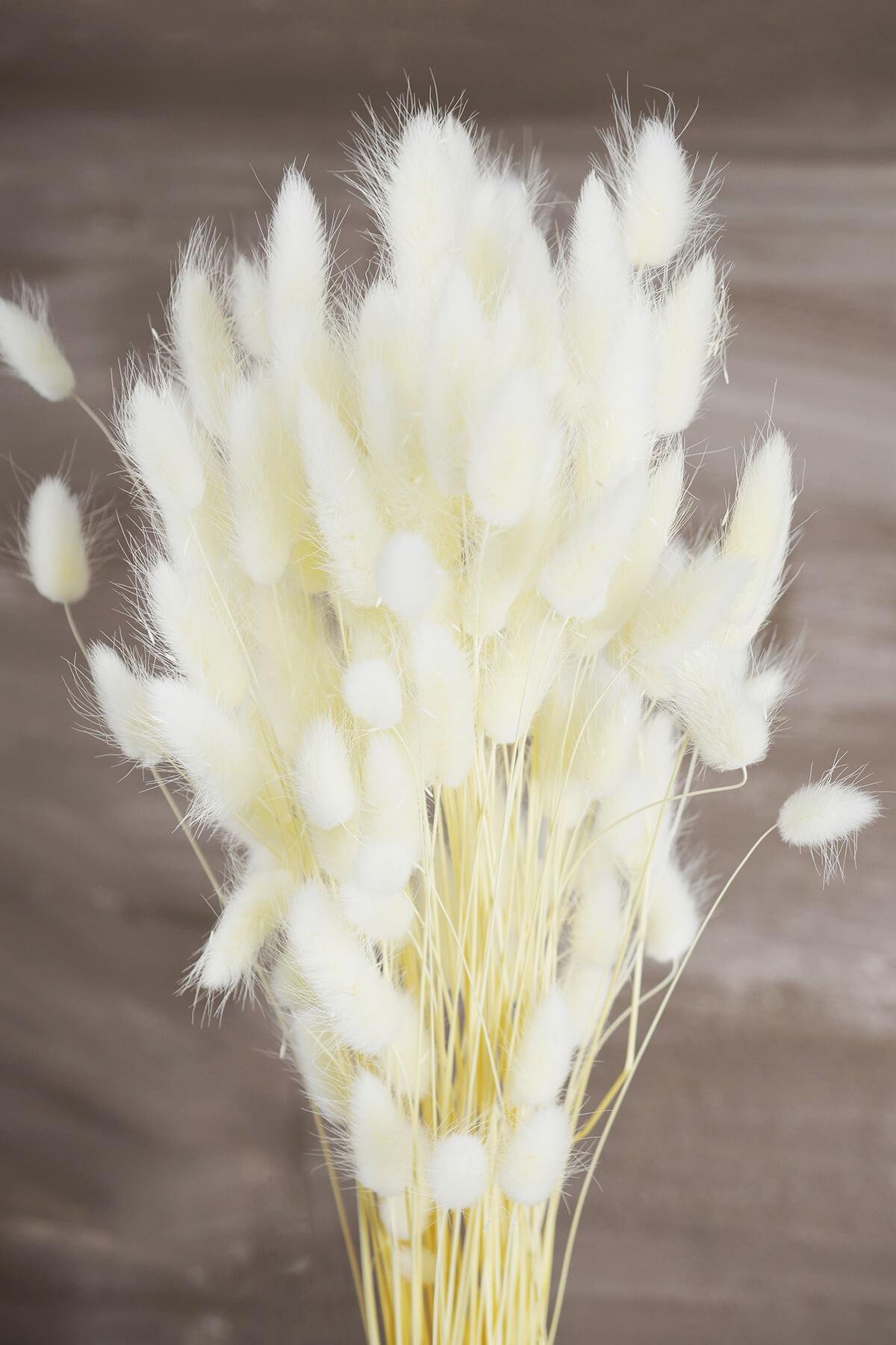 Italian Bleached Bunny Tails Ornamental Grass Bundle