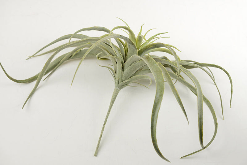 tillandsia air plants artificial 13x16