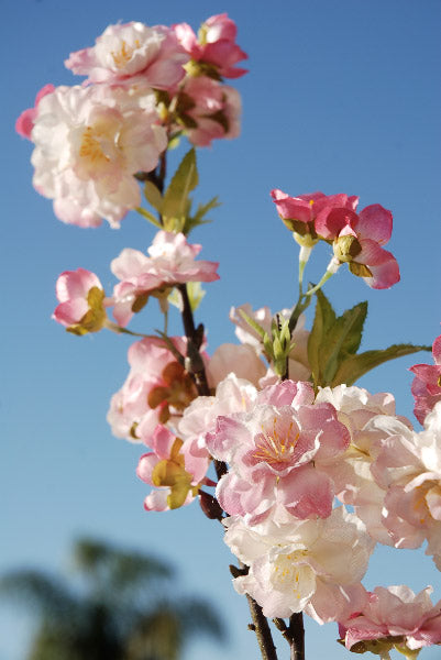 Pink Cherry Blossom Branches  45""
