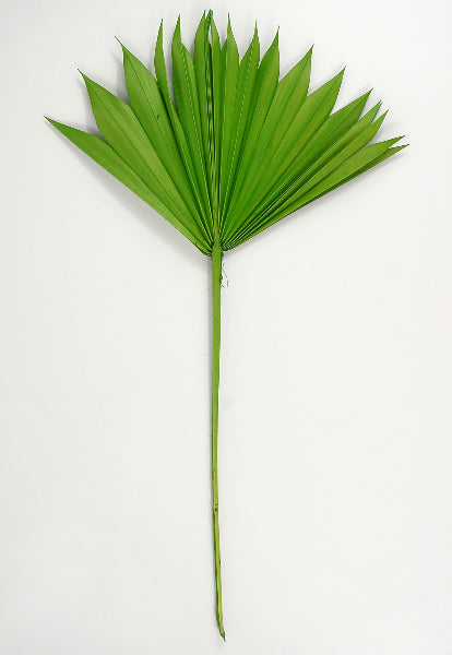 Natural Palm Leaf Fans Leaves Pack of 5