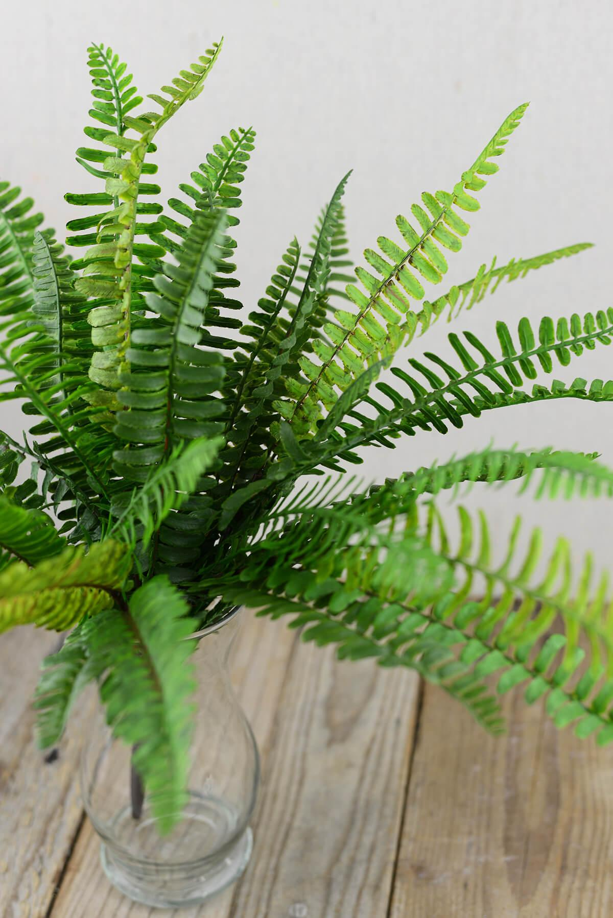 fern bush 19in