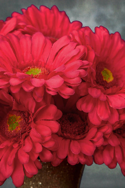 gerbera daisy stem pink beauty 9in pack of 24