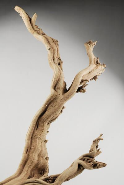 Natural Ghostwood Branches Sandblasted 10-14 in (California Driftwood)