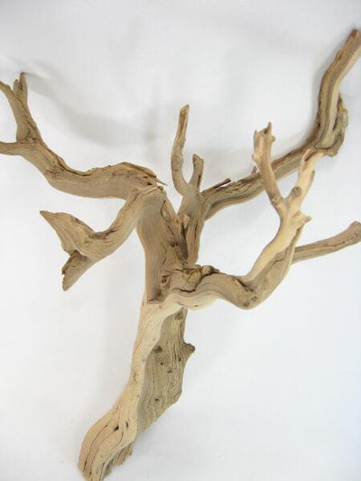 natural ghostwood branches 16 22in sanded