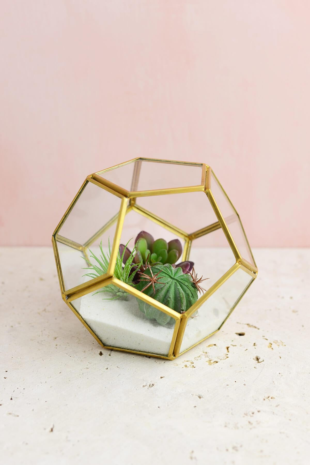 hira glass terrarium display box 5 5 x 5 5