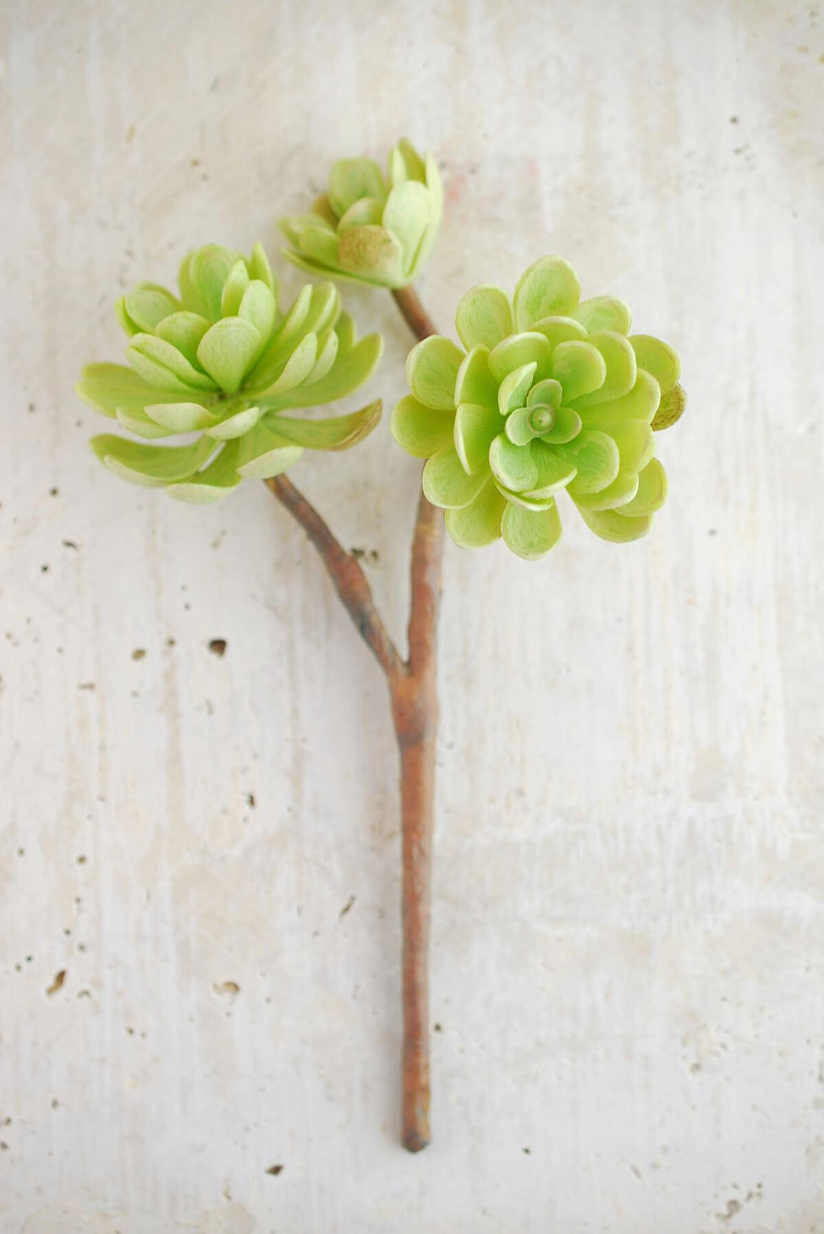 Hen And Chicks Faux Succulent Stem Green 10in Save On Crafts