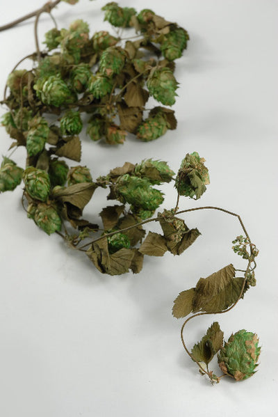 Natural Hops Garland Air Dried 18""
