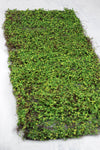 moss leaf mat green 16 x36