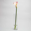 richland purple calla lily 30