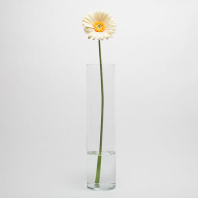 Richland Yellow Gerbera Daisy 24""