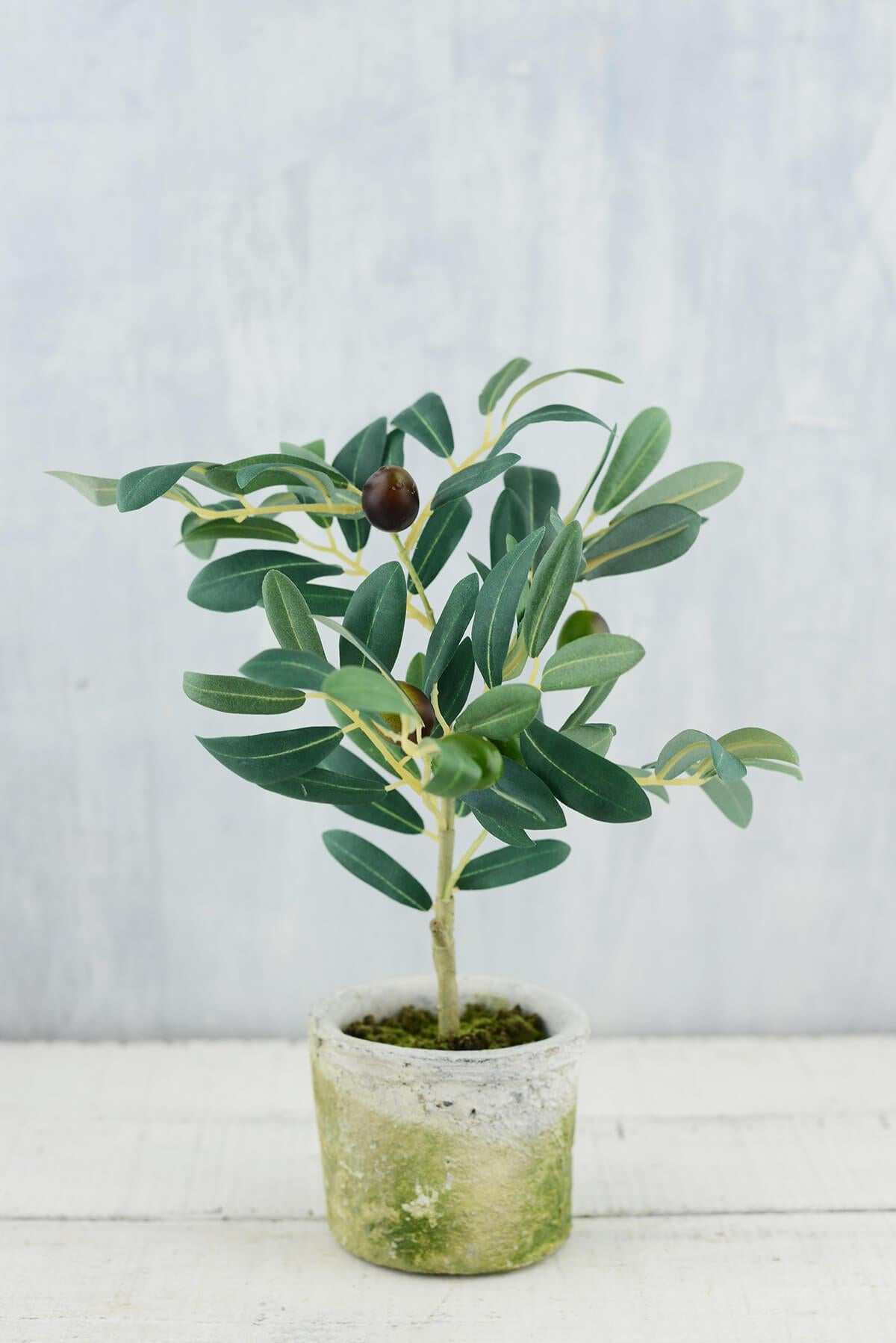 mini olive tree 12in