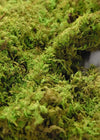 "Preserved Moss Sheets 4 lb 1"" Thick"