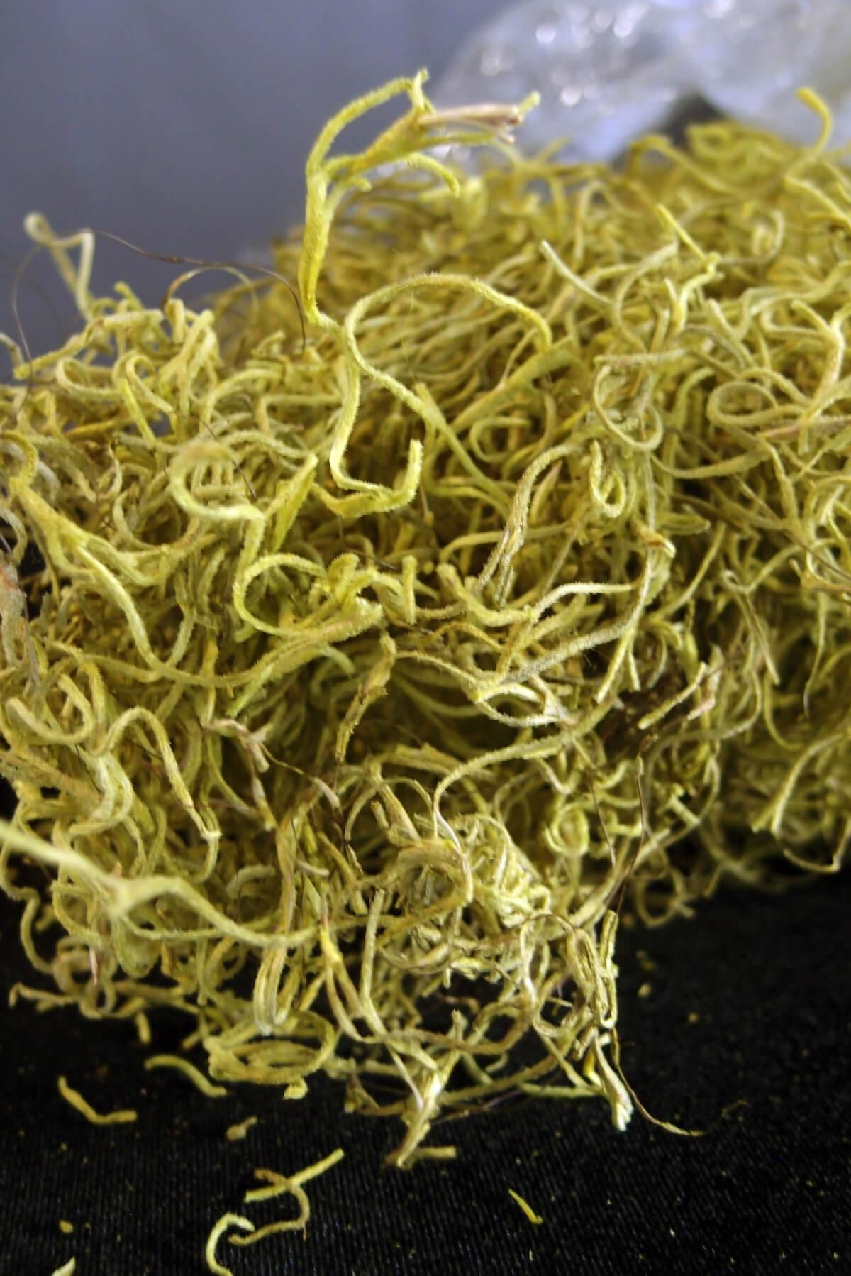 Chartreuse Spanish Moss  1 lb. / 700 cubic in.  Bag