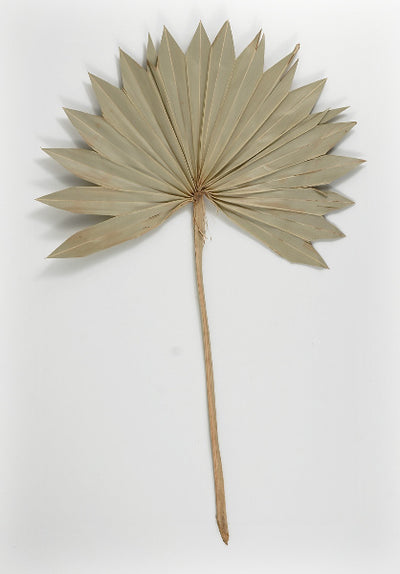 Palm Leaf Fans Dried 14x12 Pack of 5