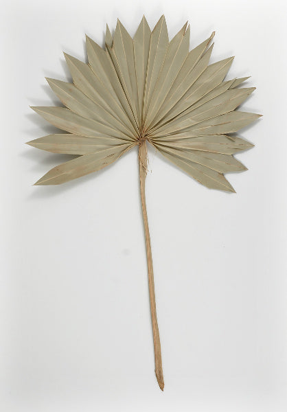 Palm Leaf Fans Dried Pack Of 5 Save On Crafts