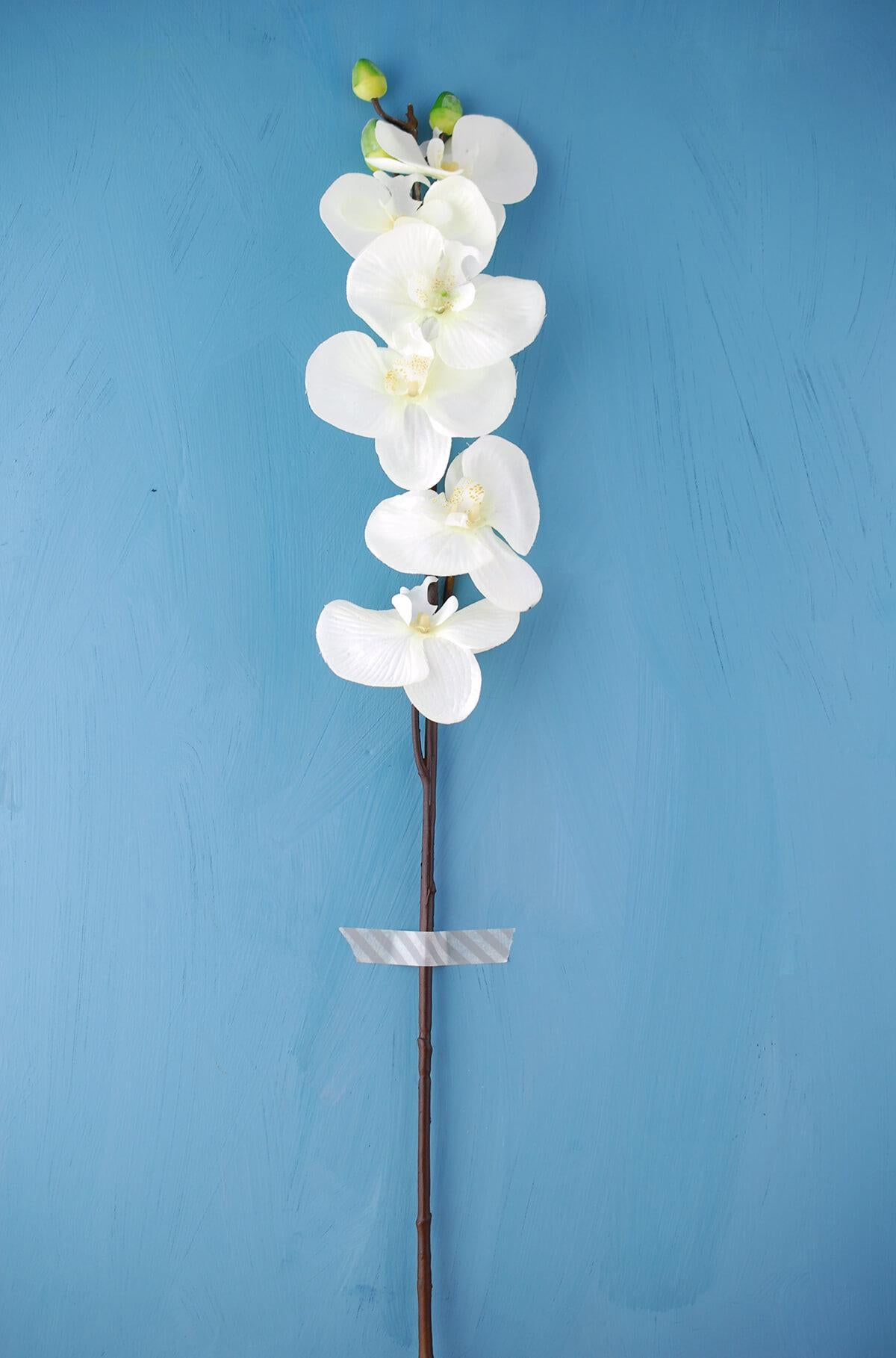 phalaenopsis orchid white 30in