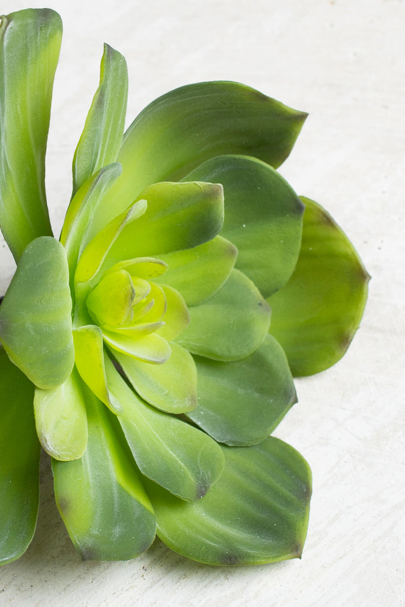Pick Echeveria 6in Green