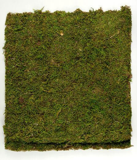 preserved natural moss 18 x 16 roll