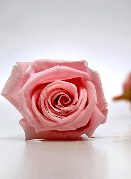 preserved roses 15 rose heads 1 inch pink