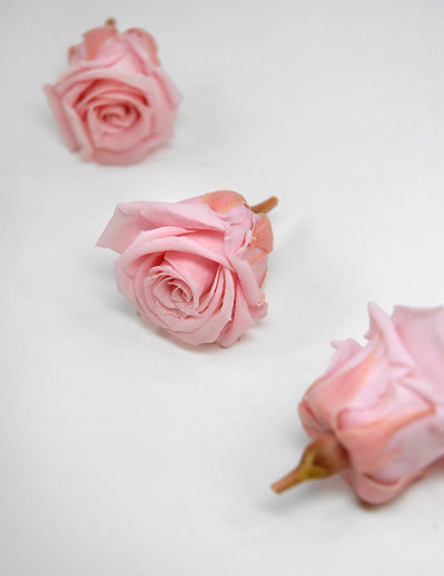 Preserved Roses (15 rose heads) 1 inch Pink