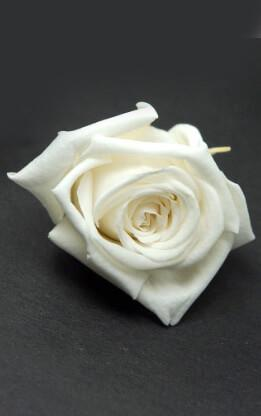 Preserved Roses White 1in (15 roses)