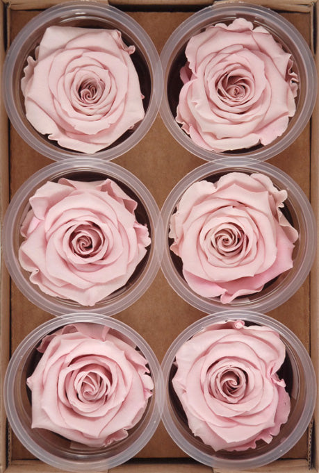 Preserved Roses 2.5in Pink (6 roses)