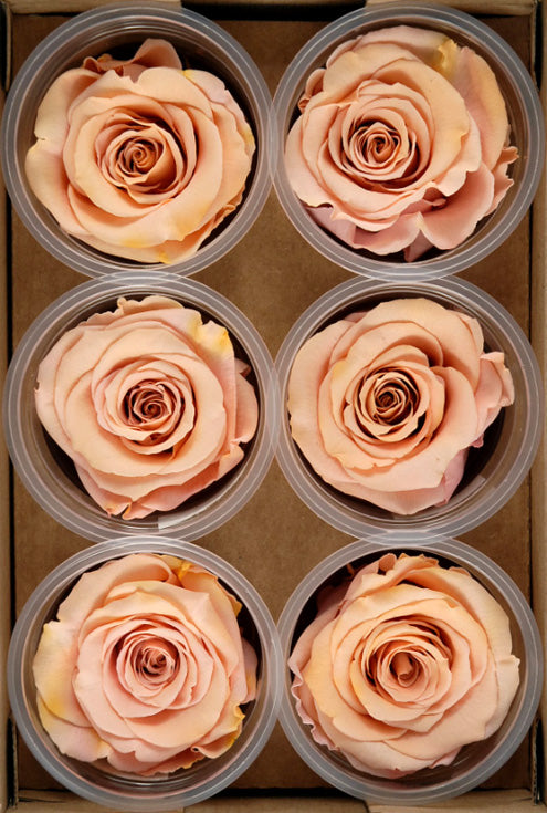"Preserved Roses 2.5"" Peach (6 roses)"