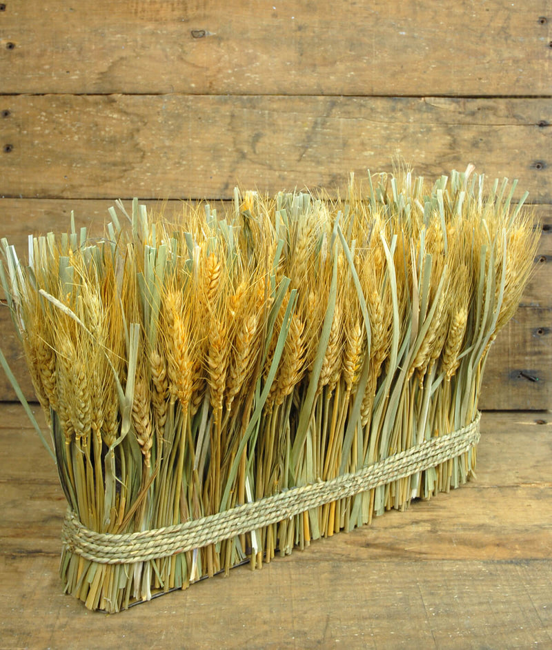 natural preserved wheat bundle 10 x 15