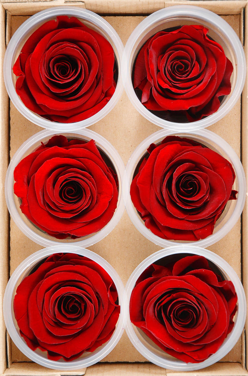 preserved roses red 2 5in 6 rose heads