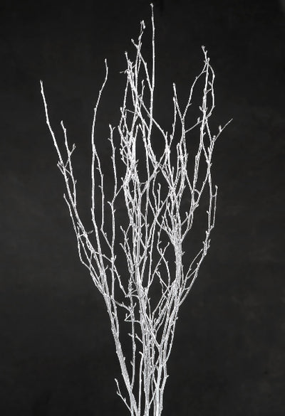 Silver Birch Tree Branches 3-4 ft (4 branches)