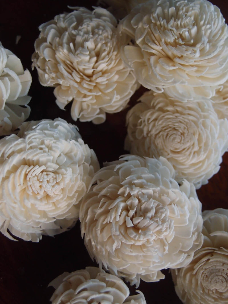 Sola Flowers  Shell Flowers Mums (12 flowers) 2.25""