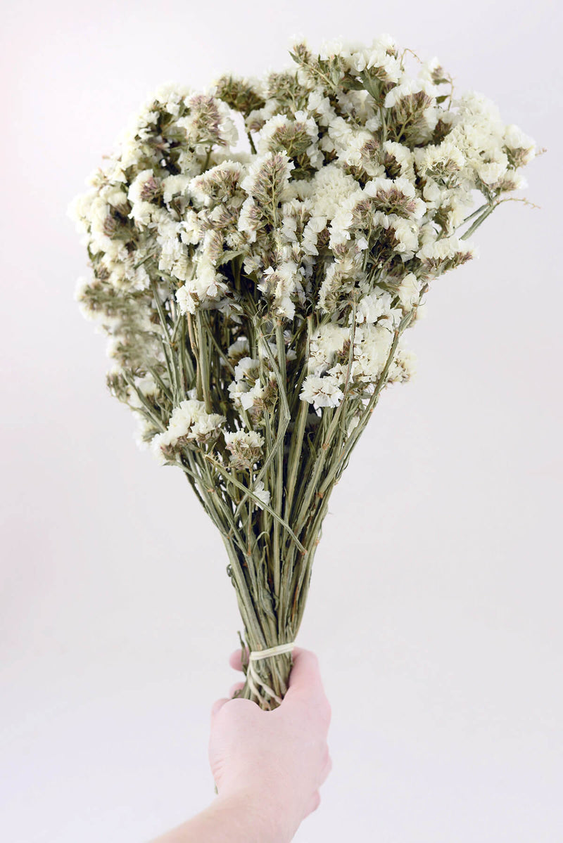 dried white statice flowers