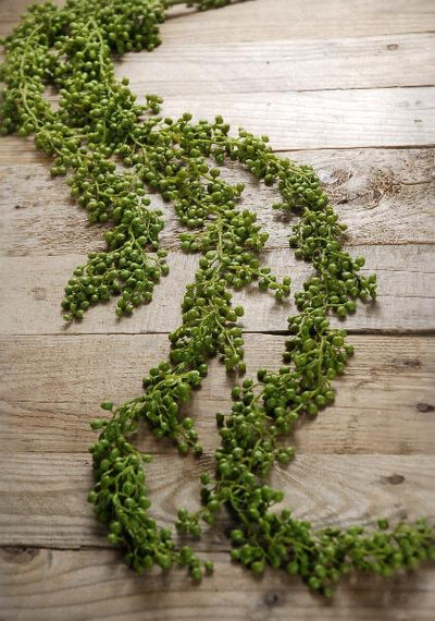 string of pearls succulent garland 4ft