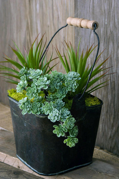 Sedum Pick with 30 Leaves  Dusty Green 5in