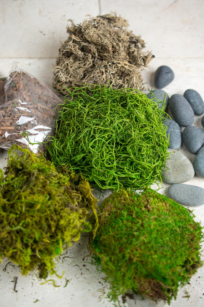 terrarium kit with bark asst mosses stones and lichen