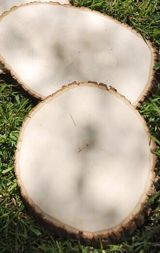 Extra Large Tree Slice 11-18 in   Basswood Country Round