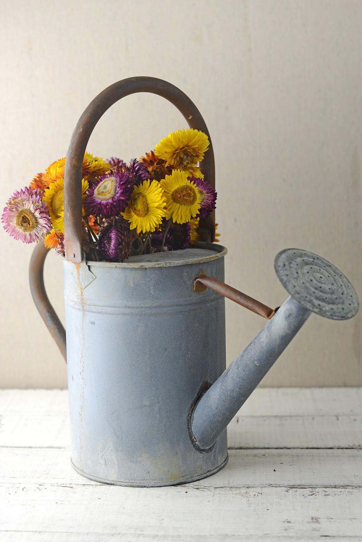 Rustic Watering Can Metal 8in