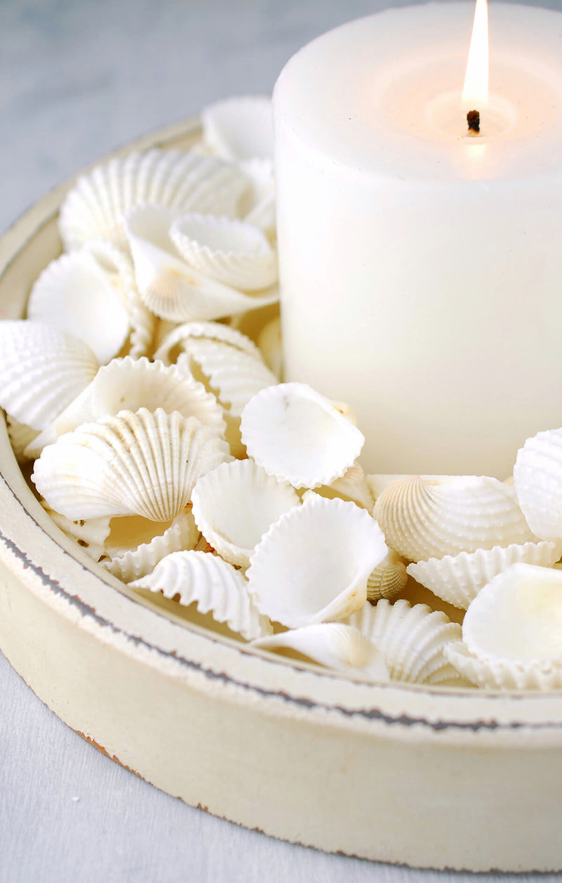 white clam shells 3 lb