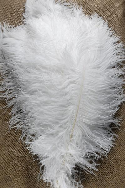 30 White Ostrich Spad Feathers 18-24in (1/4 lb)