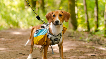 Checklist for Fall Camping with Your Dog