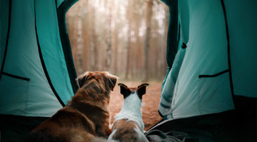 8 Tips for Camping and Hiking with Dogs