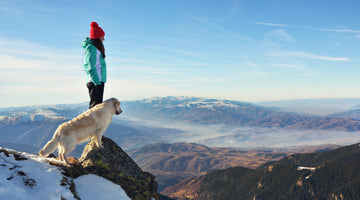Best Dog Friendly National Parks in the U.S.