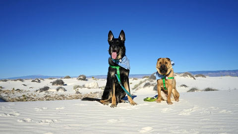 two dogs sitting in sand