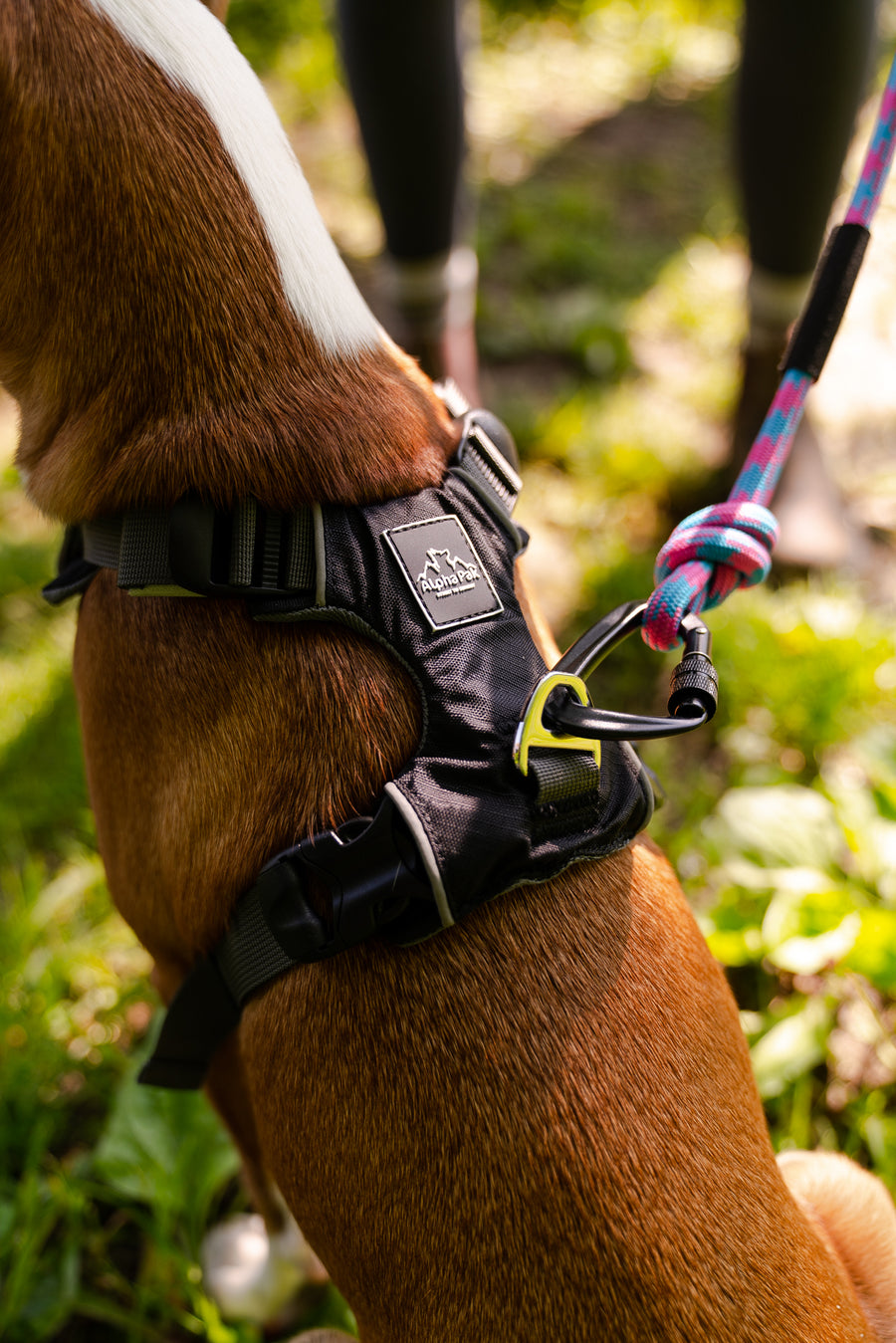 Millvue Black EZ Fit ™ Dog Harness
