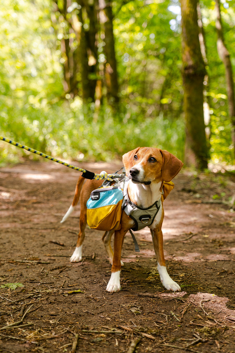 Adventurer Dog Pack with EZ Fit™ Harness (1-piece)