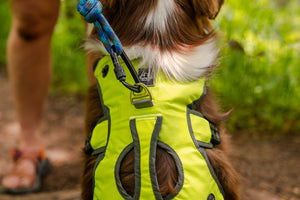 Wanderer EZ Latch™ Dog Pack (2-piece)